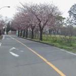 小田原フラワーガーデンへのアクセス