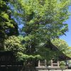安房神社の大木
